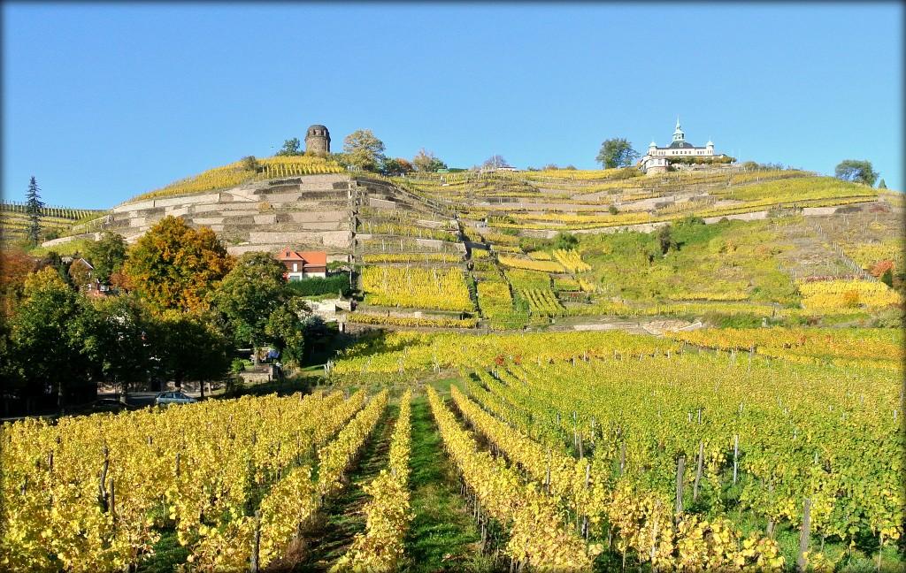 """Weinlage """"Radebeuler Goldener Wagen""""  im  Herbst"""