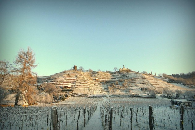 Die Weinlage Radebeuler Godener Wagen im Winterschnee