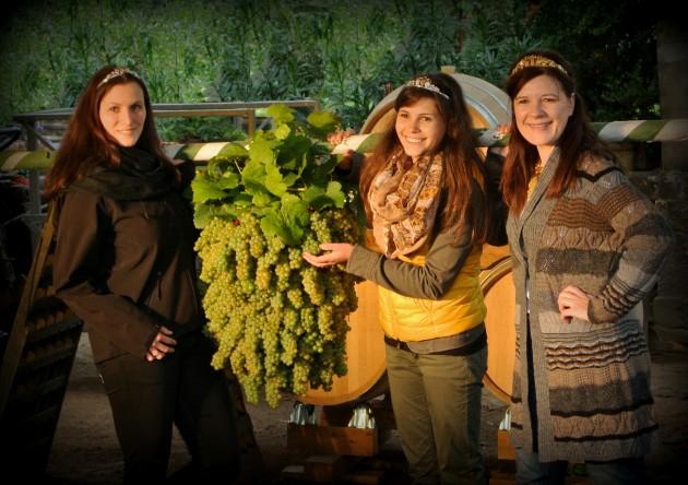 Auf das Herbst und Weinfest bereiten wir uns im Weingut alljährlich mit einer schönen Tradition vor. Unsere sächsichen Weinkönigin und ihre Prinzessinnen binden die Kalebstraube. Diese wird später zur Eröffnung des Weinfestes voran im Festumzug getragen.
