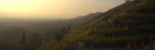 Morgen im Weinberg