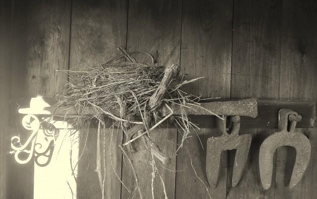 Vogelnest im Weinberghäuschen